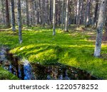 mossy forest river stream water ...   Shutterstock . vector #1220578252