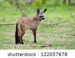 little bat eared fox scanning... | Shutterstock . vector #122057878
