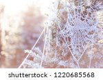 A Frosty Cobweb Hanging In A...