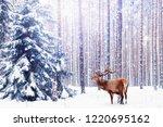 noble deer in a winter fairy... | Shutterstock . vector #1220695162