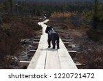 hiking in sweden | Shutterstock . vector #1220721472