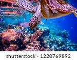 sea turtle swims under water on ... | Shutterstock . vector #1220769892