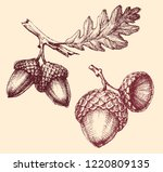 acorn isolated hand drawing | Shutterstock .eps vector #1220809135