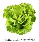 lettuce | Shutterstock . vector #122091208