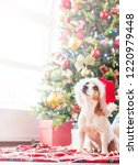 dog near christmas tree. happy... | Shutterstock . vector #1220979448