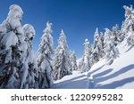 winter wonderland background....   Shutterstock . vector #1220995282