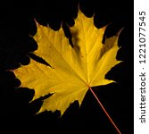 autumn yellow maple leaf on a... | Shutterstock . vector #1221077545