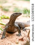 portrait of live monitor lizard ... | Shutterstock . vector #1221085018