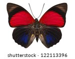 Small photo of Butterfly species Agrias claudina lugens in high definition extreme focus isolated on white background