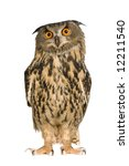 Stock photo eurasian eagle owl bubo bubo months in front of a white background 12211540