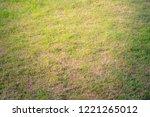 grass  backgrounds  nature ... | Shutterstock . vector #1221265012