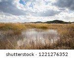 reed wetlands and autumn...   Shutterstock . vector #1221276352