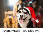 dog under the christmas tree at ... | Shutterstock . vector #1221307498