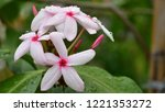 colorful flowers.group of...   Shutterstock . vector #1221353272