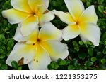 colorful flowers.group of...   Shutterstock . vector #1221353275