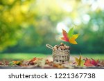 nuts in a basket in autumn park | Shutterstock . vector #1221367738