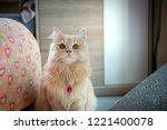 close up of cure orange cute... | Shutterstock . vector #1221400078
