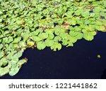 Aquatic Plants Background...
