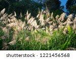 beautiful autumn reeds  scenery ...   Shutterstock . vector #1221456568