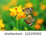 Two Butterfly On Orange Flower
