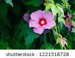 beautiful pink flower on a... | Shutterstock . vector #1221518728