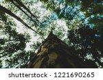 big pine at bor keaw pine park... | Shutterstock . vector #1221690265