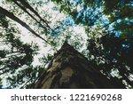big pine at bor keaw pine park... | Shutterstock . vector #1221690268