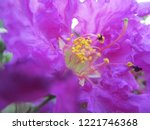 colorful flowers  beautiful... | Shutterstock . vector #1221746368