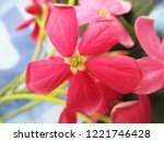 colorful flowers  beautiful... | Shutterstock . vector #1221746428
