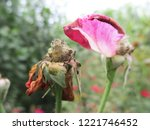 colorful flowers  beautiful... | Shutterstock . vector #1221746452