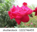 colorful flowers  beautiful... | Shutterstock . vector #1221746455