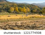 beautiful autumn rice field and ... | Shutterstock . vector #1221774508