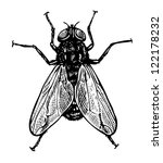 vector illustration of fly in... | Shutterstock .eps vector #122178232