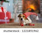 pet dog jack russell terrier... | Shutterstock . vector #1221851962