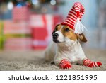 pet dog jack russell terrier... | Shutterstock . vector #1221851995