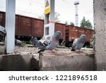 Pigeons Sitting On The Railway...