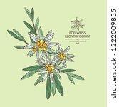 edelweiss  edelweiss flowers... | Shutterstock .eps vector #1222009855