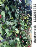 plant with red berries... | Shutterstock . vector #1222085782