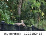 mourning dove bird perched on... | Shutterstock . vector #1222182418