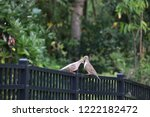 mourning dove bird perched on... | Shutterstock . vector #1222182472
