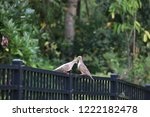 mourning dove bird perched on... | Shutterstock . vector #1222182478