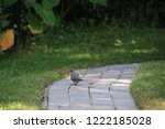 mourning dove bird perched on... | Shutterstock . vector #1222185028