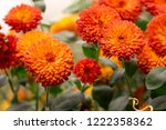 orange little decorative... | Shutterstock . vector #1222358362