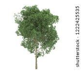 alder. tree isolated on white... | Shutterstock . vector #1222425535