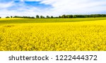 rapeseed field  panorama of...   Shutterstock . vector #1222444372