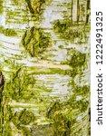 Texture Of Old Birch Tree Bark...