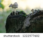 a group of tiny white mushrooms ... | Shutterstock . vector #1222577602