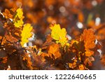 autumn leaves   closeup... | Shutterstock . vector #1222640665