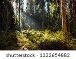 deep forest wilderness trees...   Shutterstock . vector #1222654882