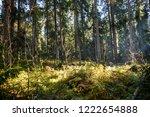 deep forest trees sunlight...   Shutterstock . vector #1222654888